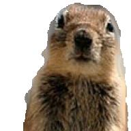 RocketJSquirrel
